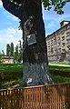 Дуб Вєтрова DSC 0432.jpg