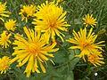 Желтенький цветочек.jpg