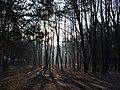 """Залишки ставки Гітлера """"Вервольф"""" (ліс) Стрижавка.JPG"""