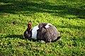 """Зајак како дел од дворот на манастирот """"Св. Ѓорѓи"""" 1.JPG"""