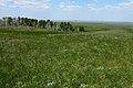 Зеленая степь в конце мая. Колок - panoramio.jpg
