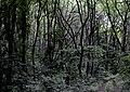 Казковий Польський ліс.jpg