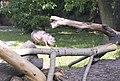 Киевский зоопарк (28).jpg