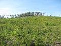 Малые Черти (Glade near Chertovo Gorodishche) - panoramio.jpg