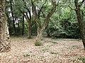 Нікітський ботанічний сад. Ялта.jpg