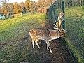 Ораниенбаум, Верхний парк, вольер.jpg