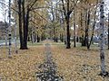 Осенняя аллея - panoramio (1).jpg