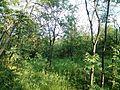 """Парк шума """"Гази Баба"""" 74.jpg"""