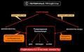 Первичные радиобиологические процессы.png