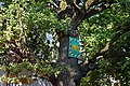 Полтава, Дуб черешчатий Першотравневий проспект, 17 відкрита тераса кафе. P1230818.jpg