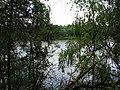 Р. Десна. Фото Виктора Белоусова. - panoramio.jpg