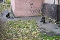 Санкт-Петербург, коты в СПбГМУ (1).jpg