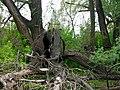 Сломанное дерево - Broken tree - panoramio.jpg