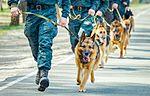 Собаки НГУ 4616 (19348632422).jpg