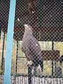 Якутский зоопарк 08.JPG