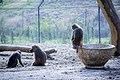 مجموعه عکس از رفتار میمون ها در باغ وحش تفلیس- گرجستان 09.jpg