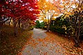 平岡樹芸センター(Hiraoka arboriculture center) - panoramio (22).jpg