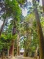 日吉神社 杉並木.jpg