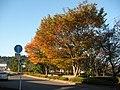 秋の日差し - panoramio.jpg