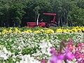 赤いトラクター(Red Tractor) - panoramio.jpg