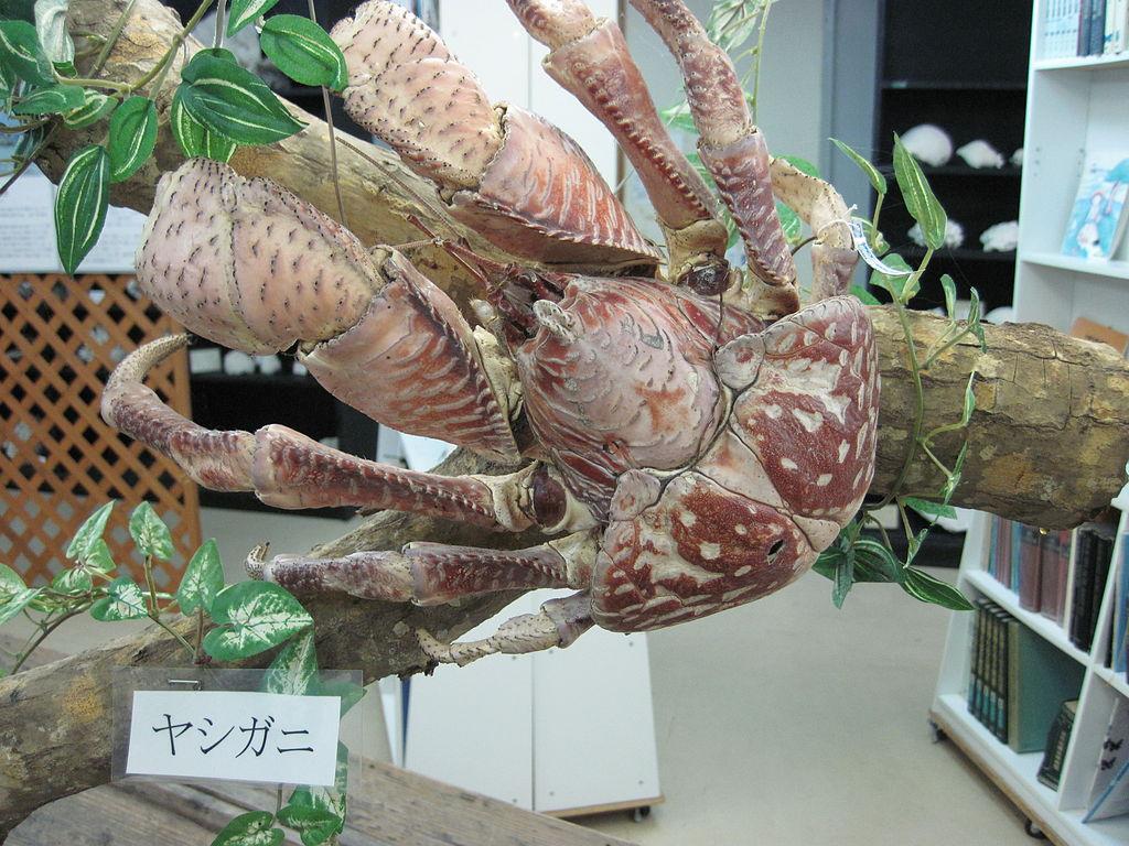 黒島研究所1315.jpg