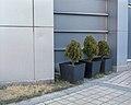-46 planting.jpg