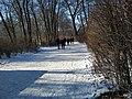 01 Winter am Orankesee.jpg