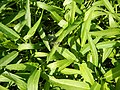 0251jfPanoramics Pulilan Fields Plants Philippinesfvf 23.JPG