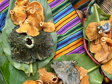 Fruitbodies of two mushroom species, one blue and one orange, are presented on large plant leaves