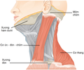 1610 Muscles Controlled by the Accessory Nerve-02 vi.png