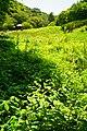 170811 Rokko Alpine Botanical Garden Kobe Japan02s3.jpg