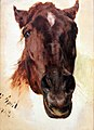 1848 Menzel Pferdestudie anagoria.JPG