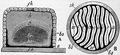 1911 Britannica - Bee - Straw skep.png