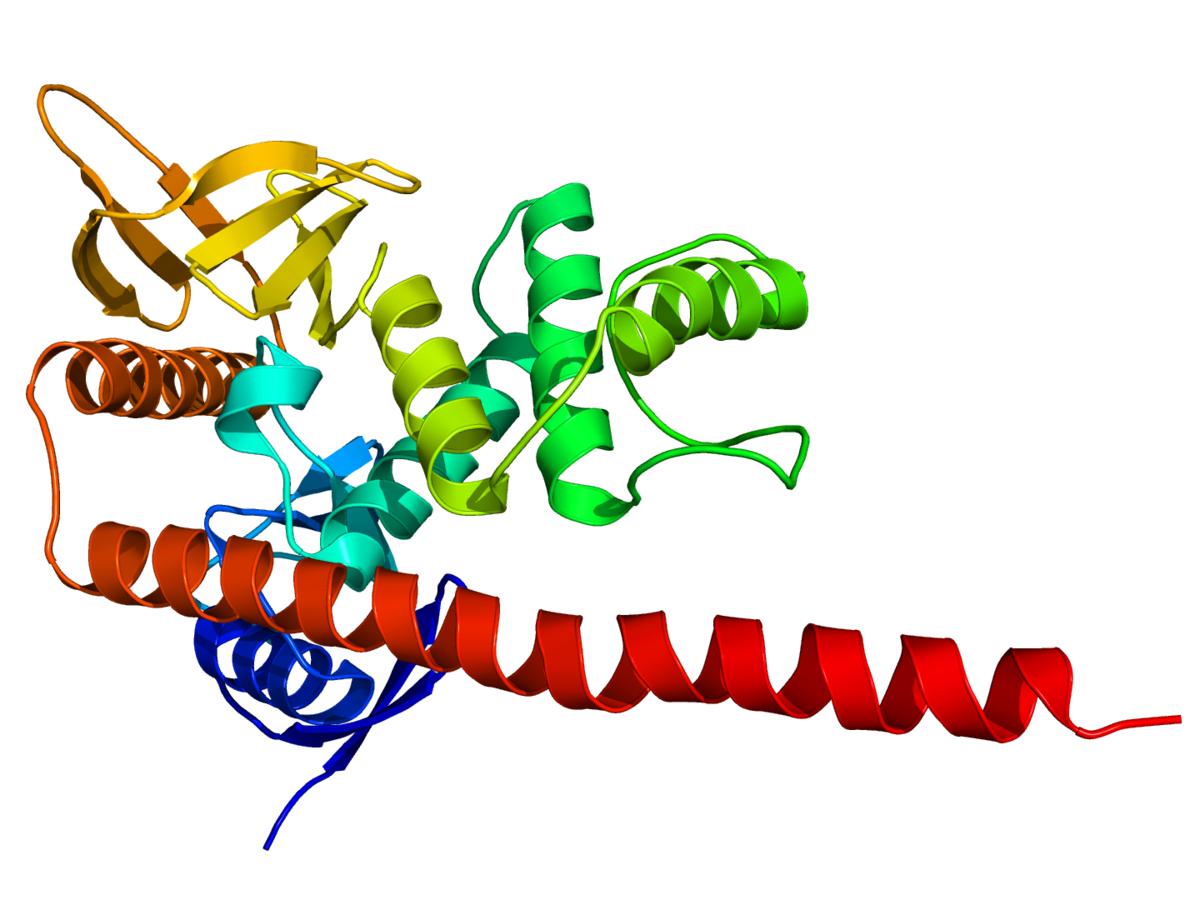 ERM protein family - Wikipedia