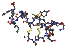 1EDN human endothelin1 02.png