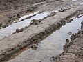 2003-11-27 Wet tracks through the mud.jpg