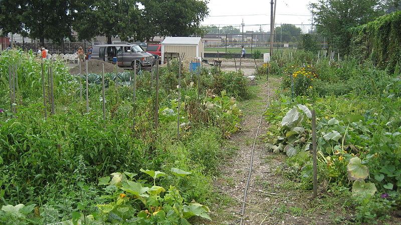 File:2007 Morganic community garden ClevelandOH 1353951538.jpg