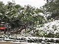 2010年12月15日夜里的那场雪 - panoramio (10).jpg