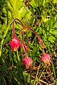 2010-10 Kamloops Summer (15958615820).jpg