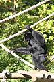 20101017 Zoo de Lille (9).jpg