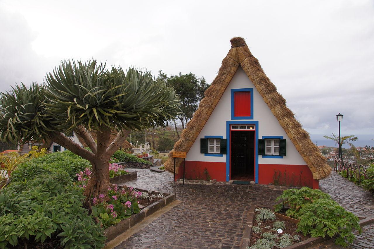 Drago (Dracaena drago), en Madeira.
