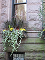 2011 windowbox CommonwealthAve BackBay BostonMA September IMG 3756.jpg