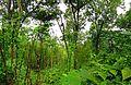 20120603南京紫金山西侧三道边密林 - panoramio.jpg