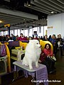 2013 Westminster Kennel Club Dog Show (8466652896).jpg
