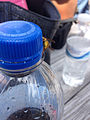 2014-08-24 14 20 25 Yellow Jacket on a Pepsi bottle at Pennridge Airport in East Rockhill Township, Pennsylvania.JPG