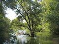 20140723Hochwasser Germersheimer Rheinauen2.jpg