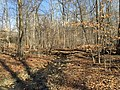 2016-02-08 11 28 06 Tributary stream of Difficult Run in the forest along the Gerry Connolly Cross County Trail between Miller Heights Road and Jermantown Road in Oakton, Fairfax County, Virginia.jpg