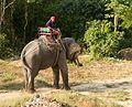 2016-04-08 Elephant Safari Krabi 03.jpg