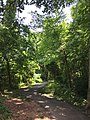 2017-06-18 12 34 36 A wooded walking trail in the Franklin Farm section of Oak Hill, Fairfax County, Virginia.jpg
