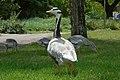 2017-07-04 13-47-56 oiseaux.jpg